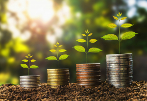 money growht in soil and tree concept , business success finance with sunshine in nature
